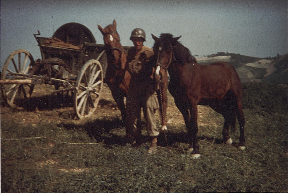 10th_Mountain_Division-Italy-mules.jpg
