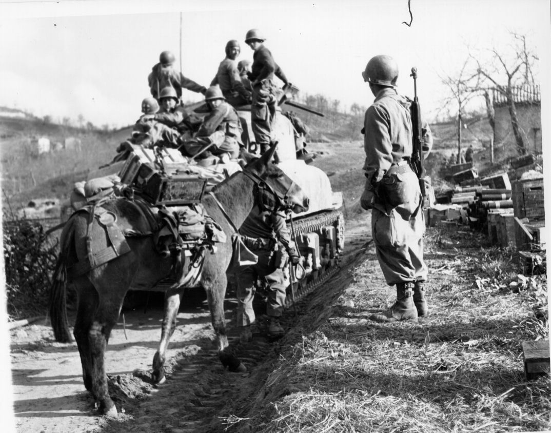 10th_Mountain_Division_Mule-web.jpg